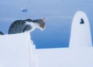 В Греции рассматривают новый закон о защите животных