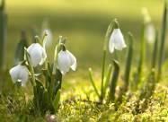 Погодні прикмети на 8 березня