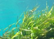 Подводные луга у берегов Британии за сто лет сократились на 92%