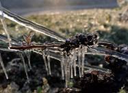 Свечи и вода: французские виноделы спасают свой урожай