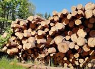 Китай и ЕС – главные уничтожители лесов