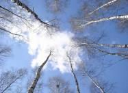 Погодные приметы на 21 апреля