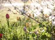 Kalendarz księżycowy ogrodnika i sadownika na maj 2021 roku