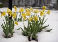 В Венгрии выдался самый холодный апрель в 21 веке