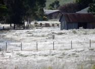 После наводнений в Автралии началось нашествие пауков