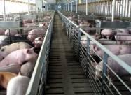 Европарламент проголосовал за прекращение выращивания животных в клетках