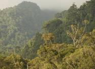 Габону выплатят 167 млн долларов за сокращение вырубки лесов