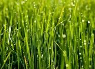 Погодні прикмети на 25 липня