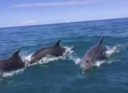 У Залізному Порту дельфіни влаштували справжнє шоу
