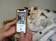 Новое приложение поможет определить, счастлива ли ваша кошка