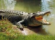На Арабатской Стрелке в озере обнаружили крокодила