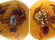 Ученые нашли в янтаре пауков возрастом 99 миллионов лет