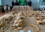 Колумбия конфисковала 3493 акульих плавника, направлявшихся в Гонконг