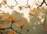 Іменини 17 жовтня: у кого День ангела і що не можна робити