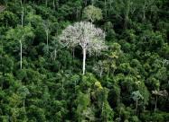Сможет ли активное лесонасаждение снизить темпы потепления климата?