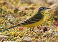 Ученые: мигрирующие африканские птицы стали дольше оставаться в Европе