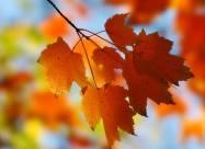 Погодные приметы на 28 октября