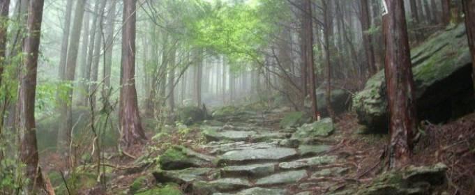 В Нью-Йорке найден самый старый лес на планете