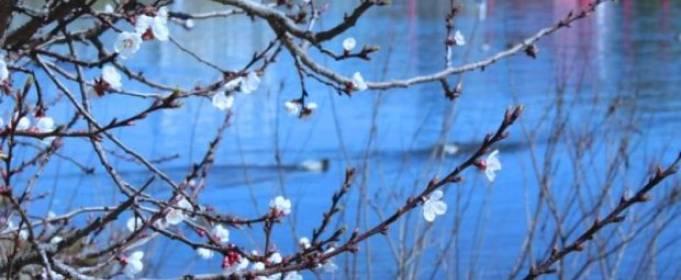 Погода в Україні на п'ятницю, 24 квітня