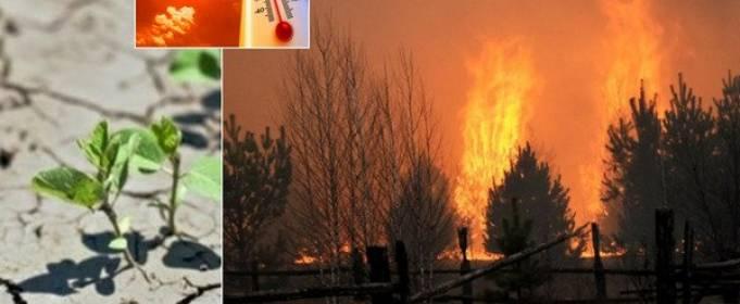 На Україну чекають засухи і пожежі
