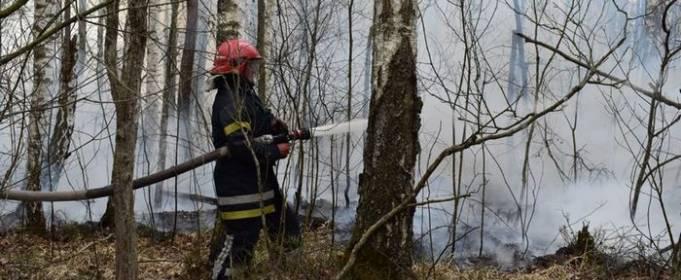 В Чернобыльской зоне и Житомирской области продолжают бороться с огнем. Фото