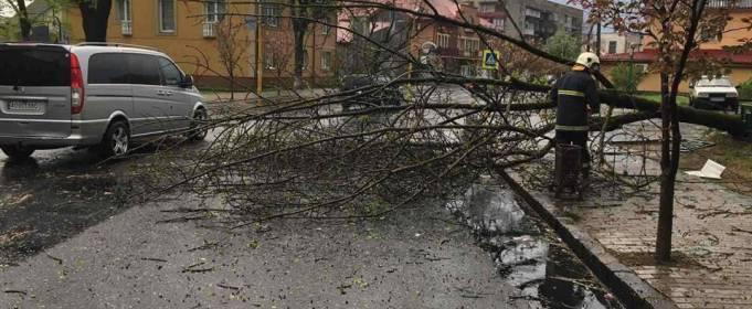 Непогода на Закарпатье. Обесточены населенные пункты и повалены деревья
