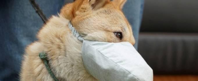 Животные пока не заражали людей коронавирусом