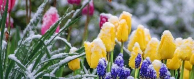 В ночь на 28 апреля в Украине ожидаются заморозки