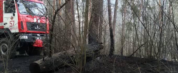 На Харьковщине ликвидировали лесной пожар