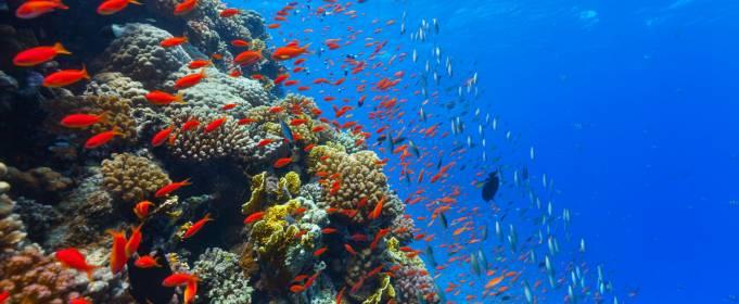 Загибель екосистеми Світового океану можлива вже в цьому десятилітті