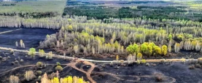 В Чернобыльской зоне и на Житомирщине продолжают гасить пожары