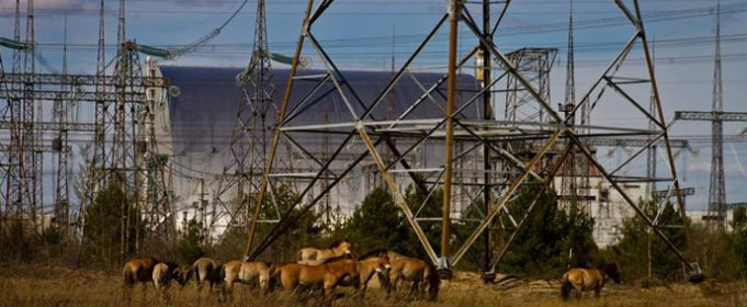 Пожары уничтожили 5 процентов территории Чернобыльского заповедника