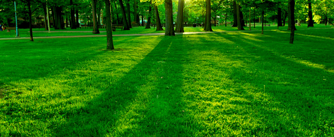 Зеленые зоны в городах спасают от преждевременной смертности