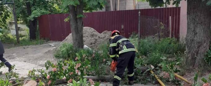 В Ужгороде дерево упало на газовую трубу