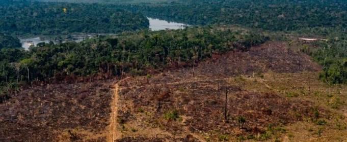 У бразильській Амазонії зникають ліси