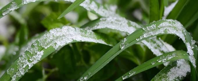 В Украине прогнозируются заморозки