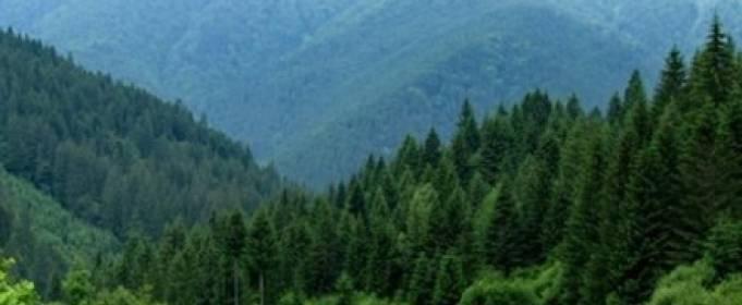 На Закарпатье выращивают молодой лес
