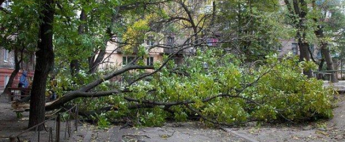 У Харкові сильний вітер повалив десятки дерев