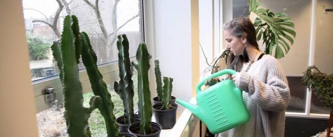 Приют для растений создан в Нидерландах
