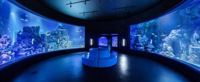 Обитатели аквариума впали в депрессию из-за отсутствия посетителей