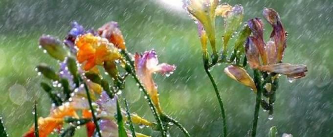 Погода в Украине на вторник, 19 мая