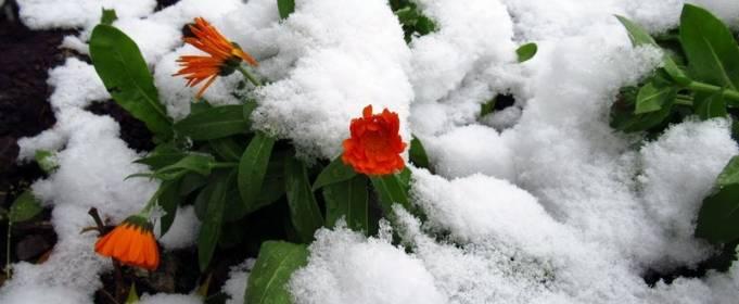 Під Києвом випав літній сніг
