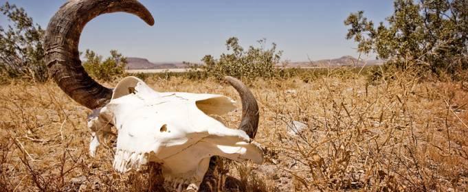 Земля переживает шестое массовое вымирание животных