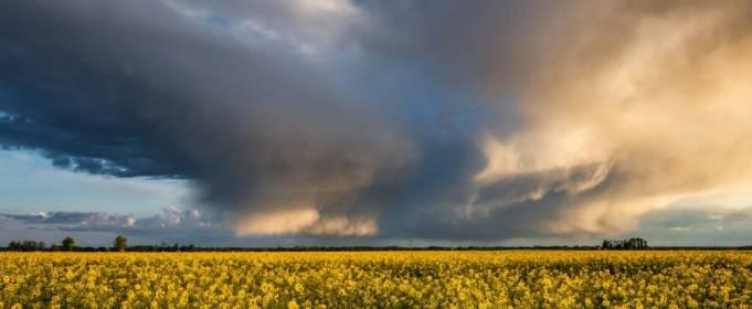 Погода в Україні на неділю, 14 червня