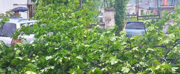 В Киеве ливень повалил деревья