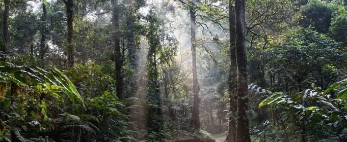 В Индонезии программа субсидий бедным семьям помогла уменьшить незаконную вырубку леса