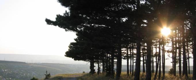 Весной в Украине высадили почти 125 миллионов деревьев