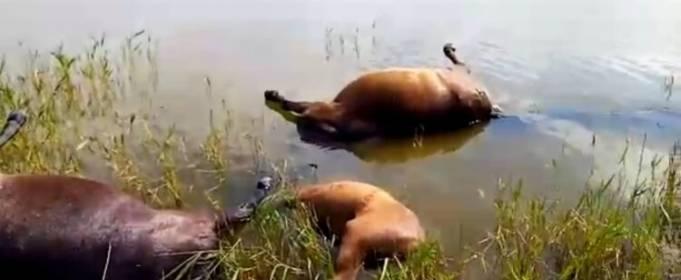 В Казахстане молния убила табун лошадей