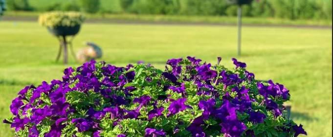 В Добропарке продолжается фестиваль петуний и цветочных инсталляций