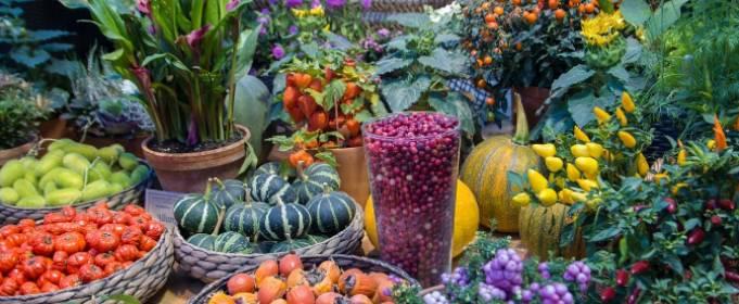 Місячний календар городника і садівника на липень 2020 року